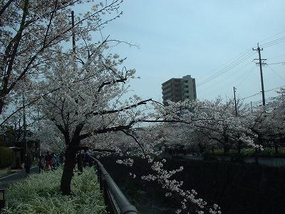 Mizuho03