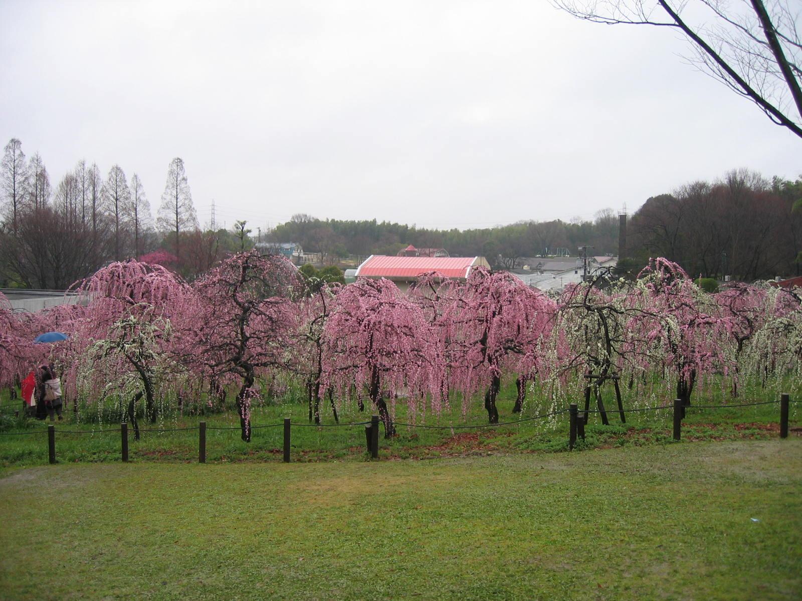 20100307_009