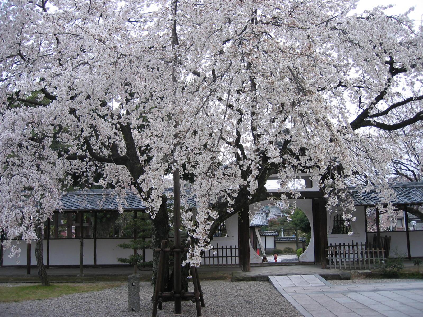 Koujyakuinura